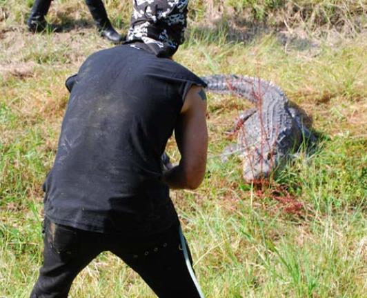 When Gators Attack