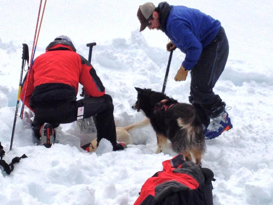 Rescue dogs dig for Chad