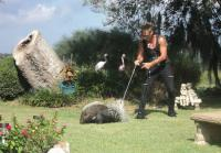 Billy traps male porcupine with throw net