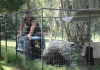 Billy moves porcupines to carrier