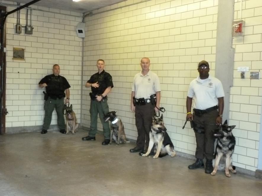 Guard dogs await teens