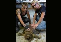 Billy and Ricky handle turtle carefully