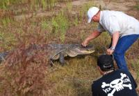 Gary Saurage tries to calm alligator