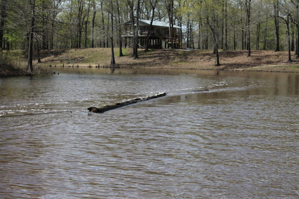 Cypress logs used to makes duck blinds
