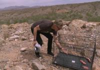 Scott  sets coyote trap