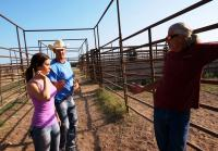 Loading rodeo bulls will be dangerous