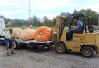 Jarrett Loading Giant Pumpkins