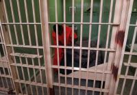DeAndre Prepares His Jailhouse Bed