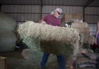 Roy moves hay
