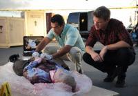 Carlos Examines Body